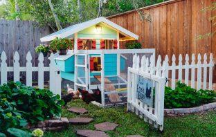 Best Backyard Chicken Coop