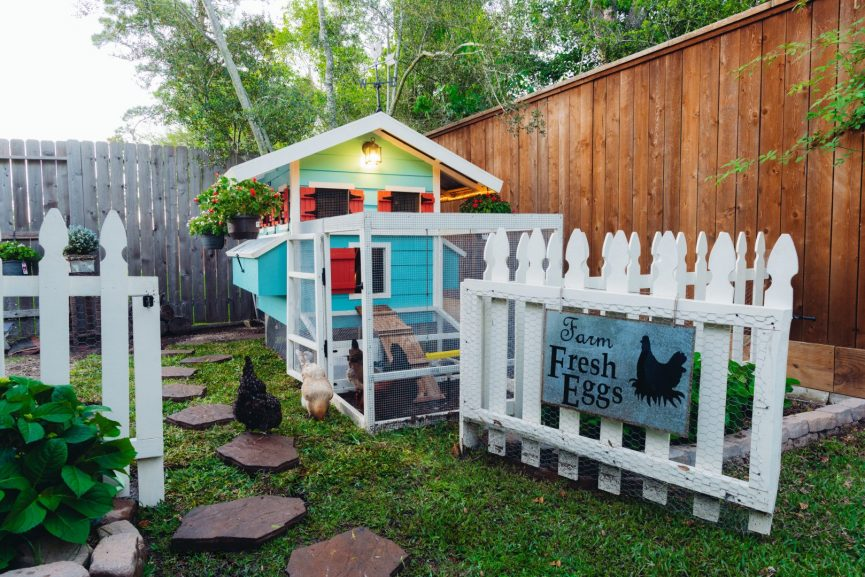 Backyard Chicken Coop Ideas